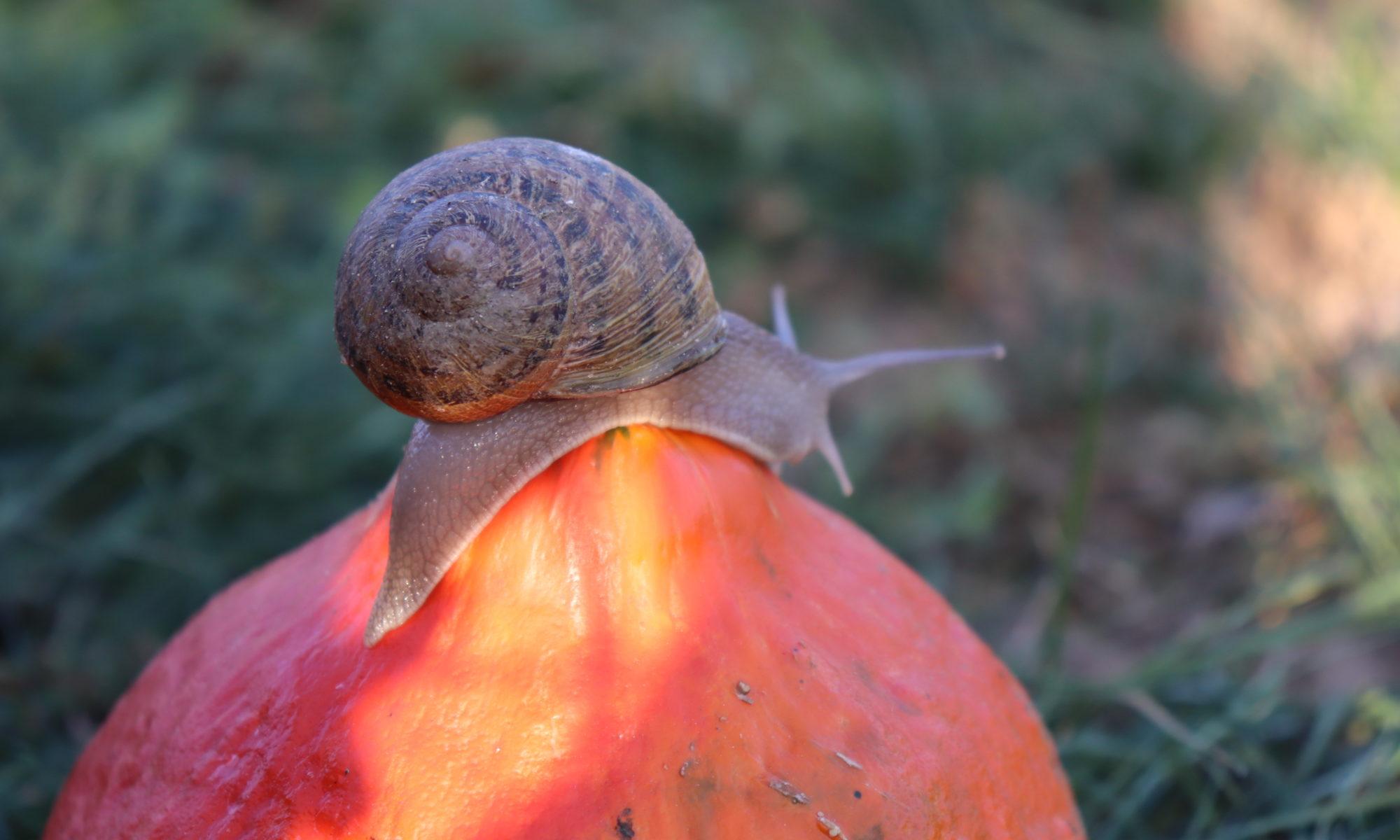Les Escargots de Caro